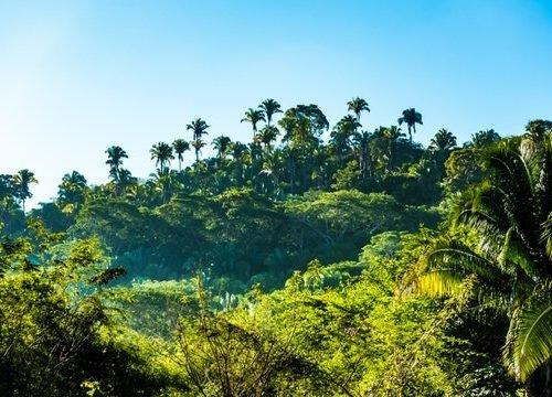 celebrity in jungle